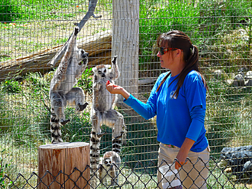 Erin Feeding the Lemurs