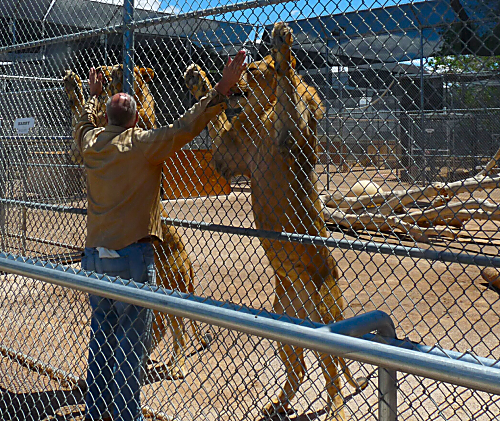 Lion Habitat Ranch 14