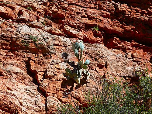 Verde RR Cactus 2