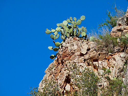 Verde RR Cactus