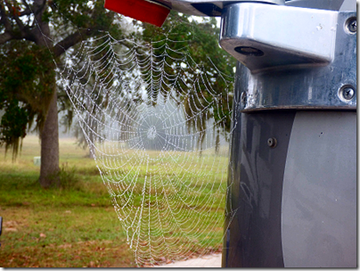 RV Spider Web