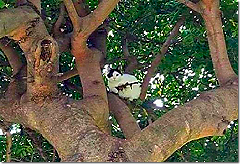 Cat With Gun In Tree