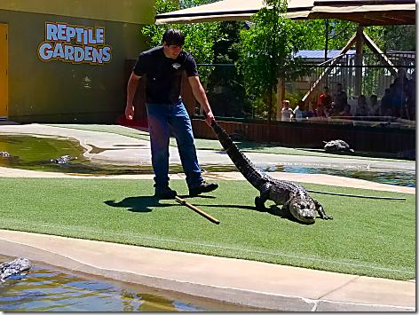 Reptile Gardens Alligator Show 1