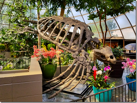Reptile Gardens Giant Turtle