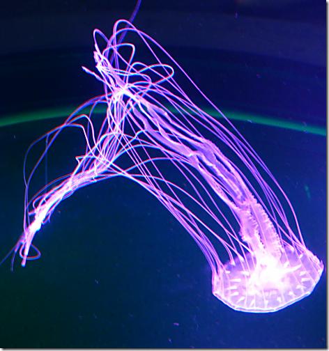 Aquarium Jellies 2