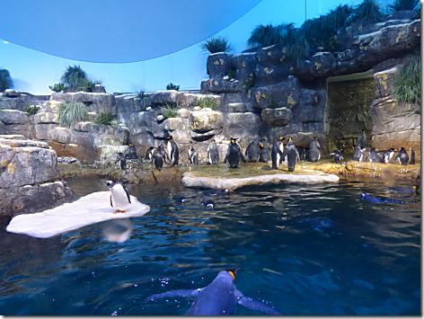 Aquarium - Pengquins 1