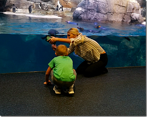 Moody Gardens - Landon Piper and Penguin