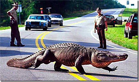 Road Gator Real