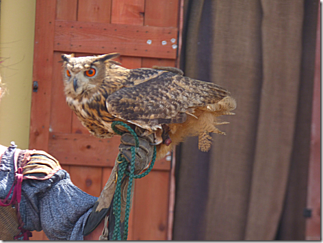 Falconery Show 3