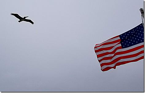 Bolivar Ferry 2 Pelican