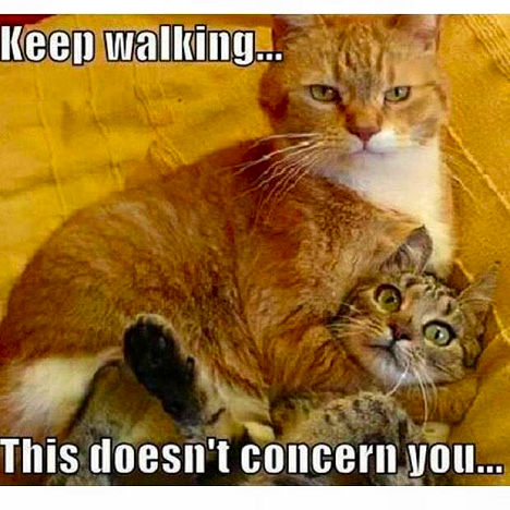 Keep Walking Cat